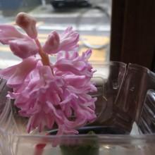 150114_flower02