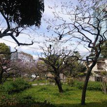 1904shibapark